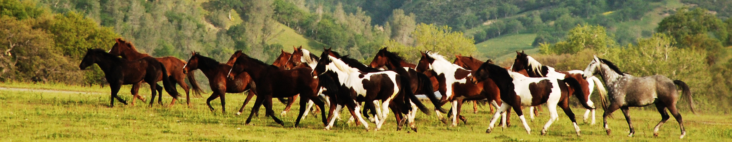 V6_Ranch_Running_Horses