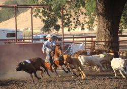 Parkfield_Rodeo_Team_Penning