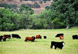 Grass_Fed_Beef