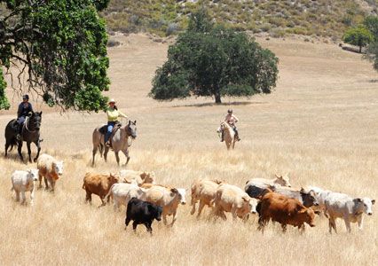V6_Ranch_Richard_Winters_Clinic_Cattle_Work
