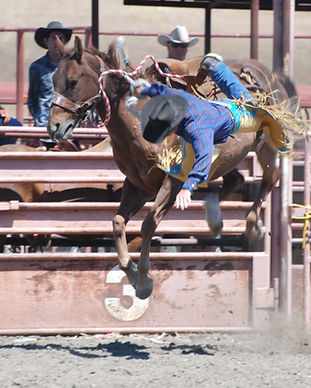 Parkfield Rodeo and state finals 574.JPG