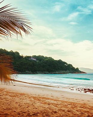 Palmbomen Beach View