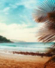 Voir le Palm Trees Plage