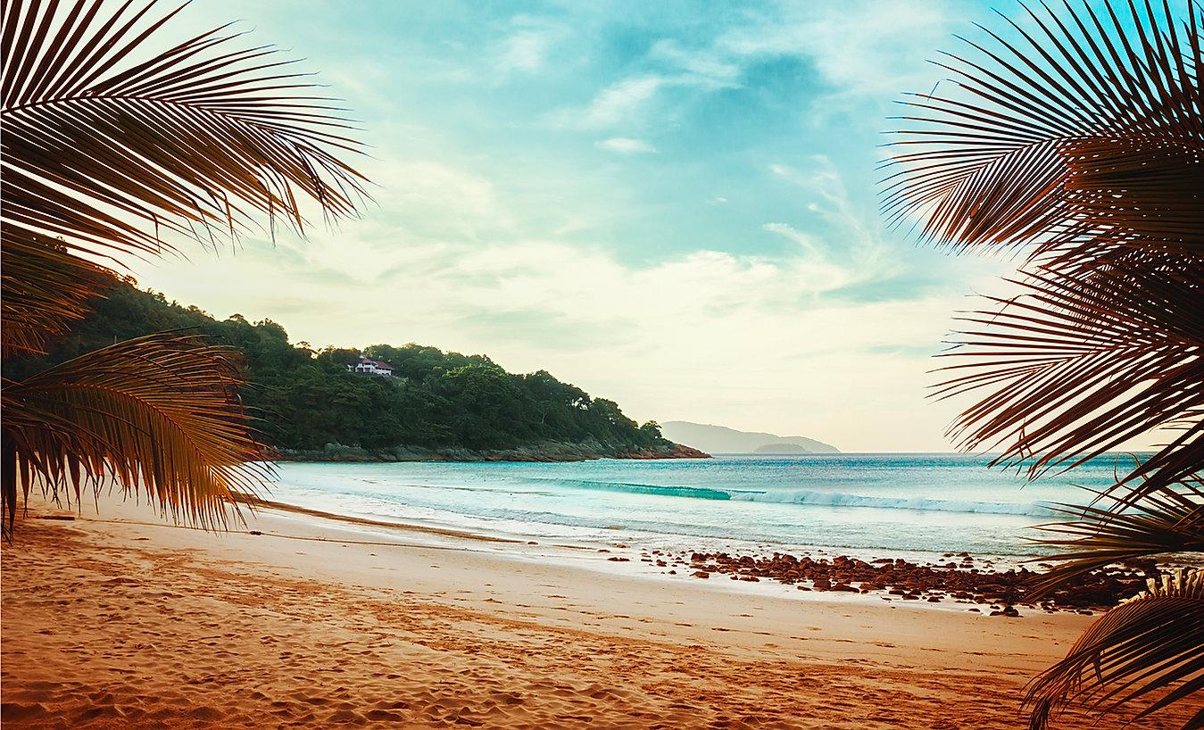 Ver playa de las palmeras