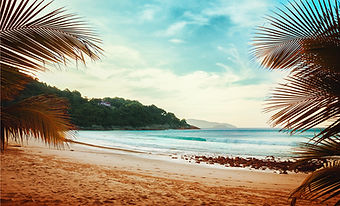 Palmiye Ağaçları Beach View