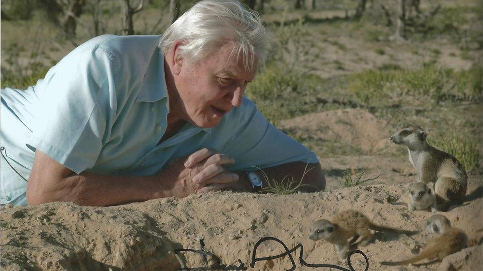 David Attenborough signed photograph
