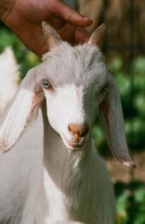 RanCher Acres Goat Milk Products