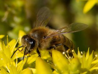 Insectes et plantes - une symbiose importante