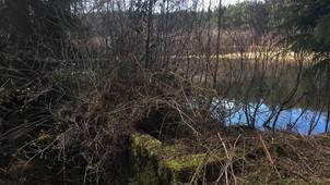 Damm kleiner See im November 2016