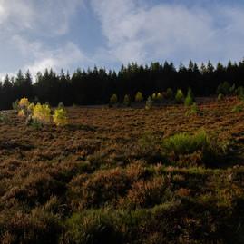 Restauration Heidelandschaft