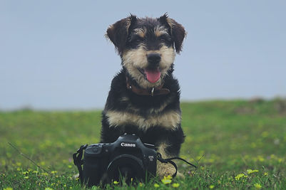 How To Get the Perfect Picture of Your Dog.jpg