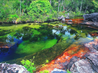 融化的彩虹-哥倫比亞Cano Cristales 七彩河