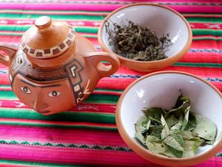 秘魯的天然口香糖:古柯葉