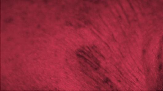small_RED half- LO_BIENAL12_STORIE_AVISO