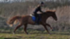 kris hest.jpg