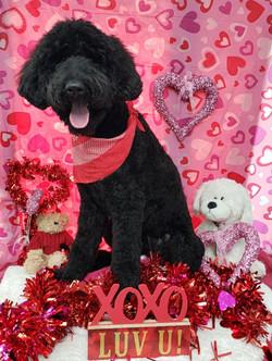ValentinesDogs-011