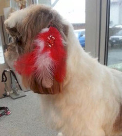 Candy's Custom Feather Treatments