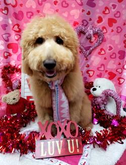 ValentinesDogs-013