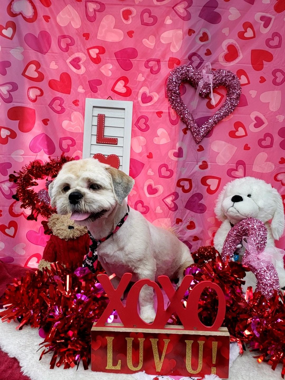 ValentinesDogs-003