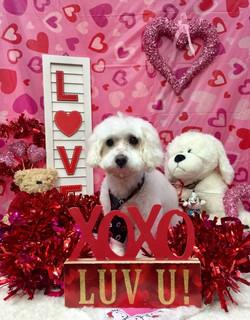 ValentinesDogs-016