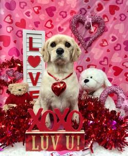 ValentinesDogs-017