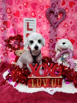 ValentinesDogs-004