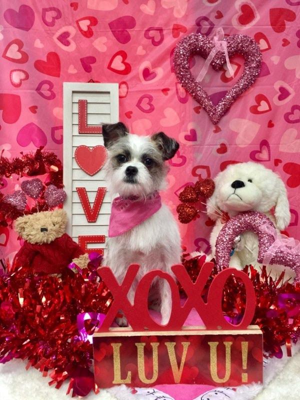 ValentinesDogs-014