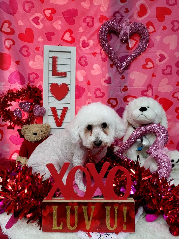 ValentinesDogs-005