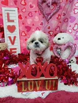 ValentinesDogs-009