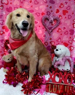 ValentinesDogs-015