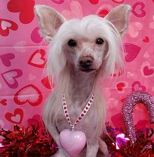 ValentinesDogs-001.jpg