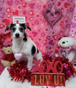 ValentinesDogs-010