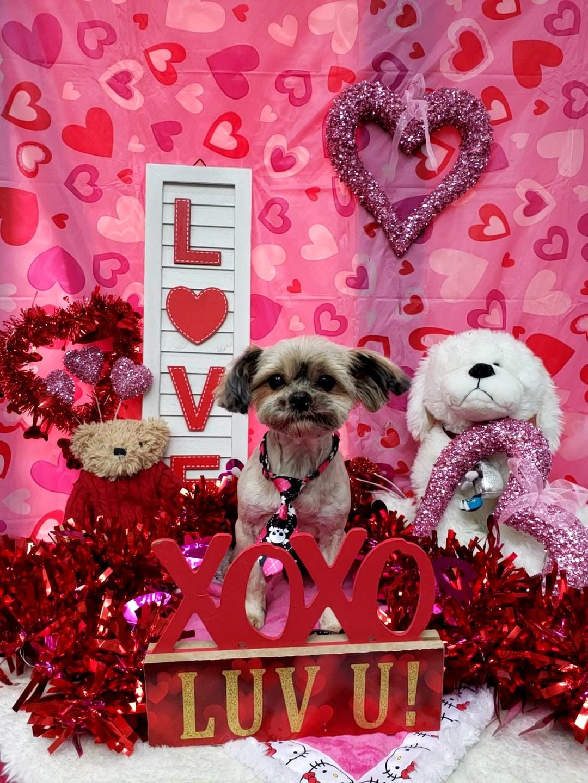 ValentinesDogs-002