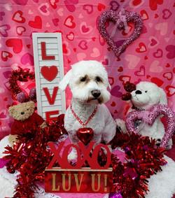 ValentinesDogs-012