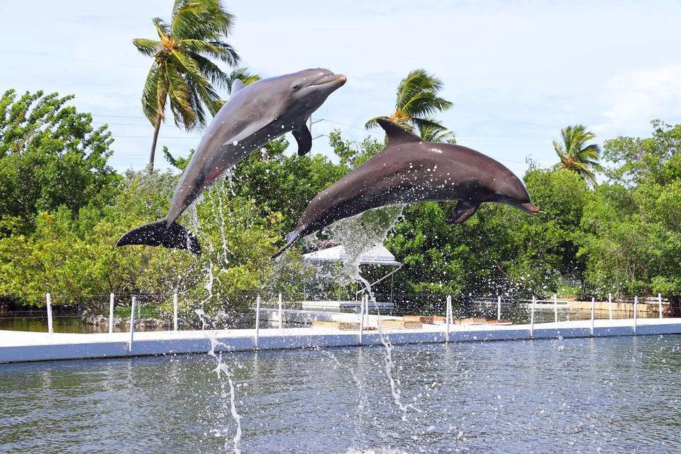 dolphinsbrighter.jpg