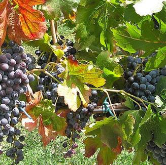 Colorado Wine Country