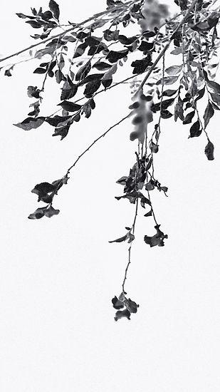 gray_edited.jpg