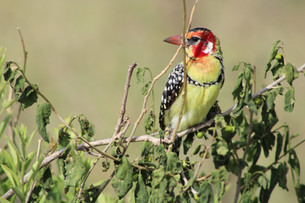 Beautiful Birds of Tanzania