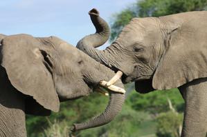 Giant of africa - Safari in Tz
