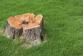 wycinka drzew 2.jpg