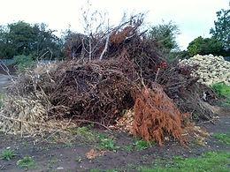 wycinka drzew 3.jpg