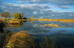 the Brenne Lakes