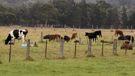 Beef price to fall from record highs: TEM's Matt Dalgleish