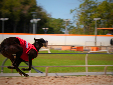 Greyhound welfare hearings heading to Temora