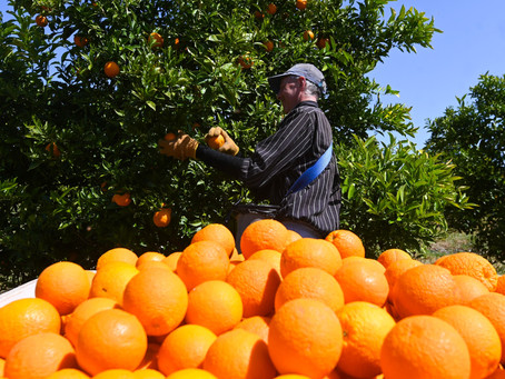 Could South Australia be an eastern hub for new agriculture visa workers?