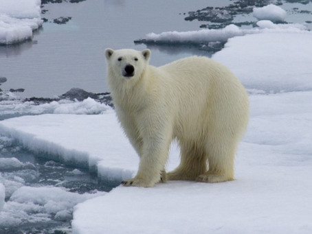 The climate change deception