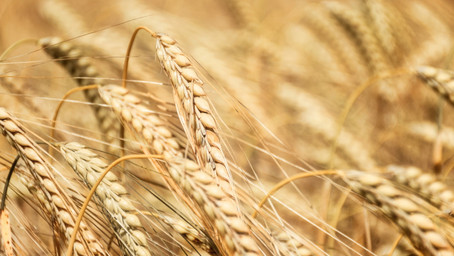 Farm safety concerns as labour shortage sullied by union slur