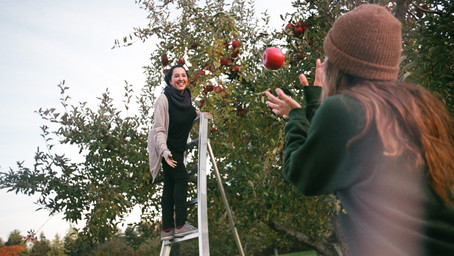 NSW Labor to throw more work at Agriculture Commissioner