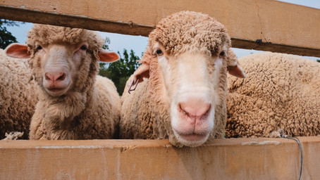 NZ to ban live exports by 2023