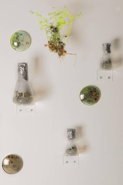 Seed Dispersion | תפוצת זרעים